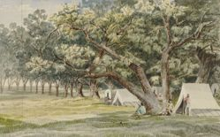 A Cottonwood Grove