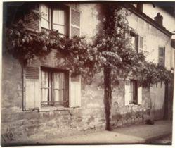 Glycine (Wisteria), Châtillon