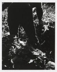 Untitled (Man in vegetable garden)