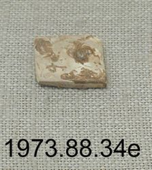 Shell fragment with Mayan glyphs