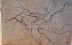 Study of a Tree (recto and verso)