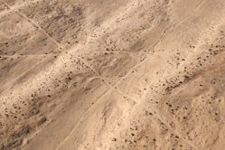 """LATITUDE: 31°6'46""""N / LONGITUDE: 34°24'10""""E, November 13, 2011. Intersecting seismic test lines in the Ḥalutza Sands of the Palestinian village of Nabaʽāt, of the Tarabīn tribe, evacuated in 1948 in the wake of Operation Yo'av, an Israeli military operation carried out from October 15 to 22, 1948, under the command of Yigal Allon which had as its ultimate goal to conquer the entire Negev. The intersecting lines are seismic test lines, part of a large number of parallel cuts that divide this remote corner of the desert into distinct oil exploration zones. Oil was drilled for in the late 1980s but no commercial quantities were found., from the series Desert Bloom"""
