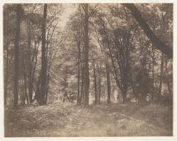 La forêt de Fontainebleau (The Forest at Fontainebleau)