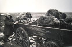 Carting the Dead, Kerch, Crimea, from The Great Patriotic War, Vol. I