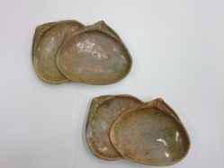 Pair of clam dishes