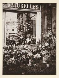 Boutique Fleurs -37 (Flower Shop)