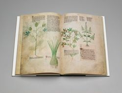 Intervention: A Medieval Herbal, A Facsimile