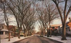 Untitled [Suburban street], from When the Bough Breaks