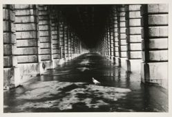 Pigeon, Paris 1981, from the portfolio: Edouard Boubat, 1981