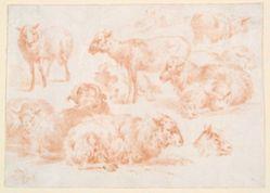 Studies of Sheep