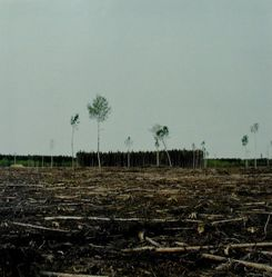 A Clear Cut, from Tree Planting