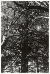 Skogen