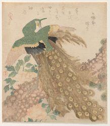 Of Three Pieces [Peacock] (Mi hira no uchi)