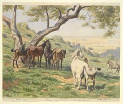 Horses in Field, Tivoli