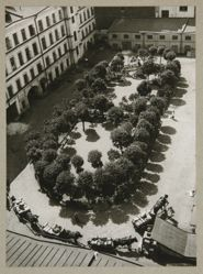 Courtyard, (The Garden in the Yard, Myasnitskaya, no. 17), from The Alexander Rodchenko Museum Series Portfolio, Number 1: Classic Images