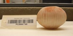 Miniature fluted tecomate