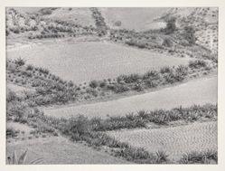 Paisaje de siembras (Growing Landscape)