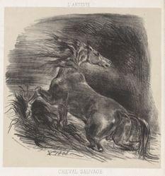 Cheval sauvage (Wild Horse)