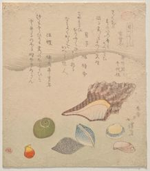 Seven Shells at the Edge of the Sea, from the series Shells Compendium (Kaizukushi)