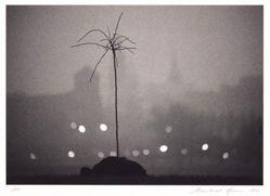 Thin Tree, Krakow, Poland
