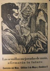 Las semillas mejoradas de maíz, afirmarán tu futuro (The Improved Corn Seeds Will Affirm Your Future)