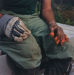 Untitled (Orange Duct Tape), from the series Tree Planting