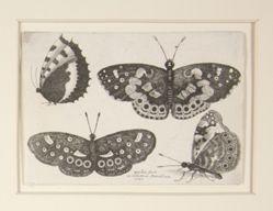 Muscarum Scarabeorum (Moths & Butterflies)