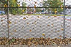 Untitled (Leaves in Fence)