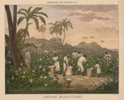 Progress of Cotton: #1 - Cotton Plantation