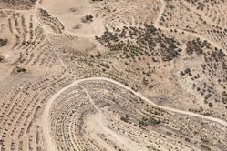 """LATITUDE: 31°18'48""""N / LONGITUDE: 34°56'34""""E, October 9, 2011. The Meitar Forest, an extension of the Yatir Forest, although non-contiguous with it. The forest, which the JNF began planting in the 1980s, is a green belt meant to create a barrier between the affluent Jewish suburb of Meitar and the Bedouin township of Ḥūra. The hiking trails and bike paths within the new forest are woven throughout the site. The forest is north of the so-called aridity line that marks the threshold of the desert. Below this line, a method known as """"savannization"""" is employed: a mixture of sparsely scattered acacia or eucalyptus trees with bushes and grass between, as found in the savannah region, with irrigation coming from long terraces that collect rainwater, optimizing the water retention. Above it, however, the plantation system consists of rows of Aleppo pine, the most commonly planted tree in Israel., from the series Desert Bloom"""