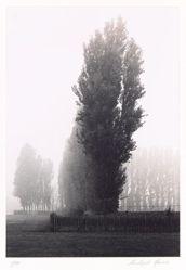 Trees, Wimbledon Park, London, England