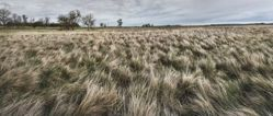 Mac's 40 Acres, Goshen County, Wyoming, from the series Susurrations: the Wyoming Grasslands Photographic Project