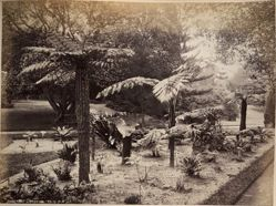 Botanic Gardens, from the album [Sydney, Australia]