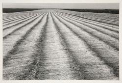 Champ de lin, Normandie 1978, from the portfolio: Edouard Boubat, 1981