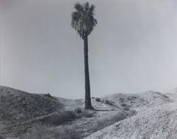 1212 Palms