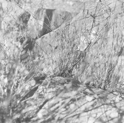 1993 GF-7 (Moab, Utah in Nature's Realm series)