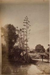 """""""Botanic Gardens"""", from the album [Sydney, Australia]"""