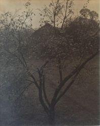 Plum Tree, Lake George (or Rain Drops, Apple Tree)