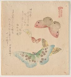 The Painting Manual of Flock of Butterflies (Gunchō Gafu)