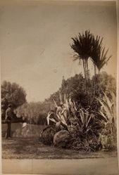 Botanic Gardens, Sydney, from the album [Sydney, Australia]