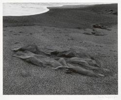 Pebble Beach, California, from Portfolio II