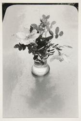 Fleurs des champs, Foret de Fontainebleau 1980, from the portfolio: Edouard Boubat, 1981