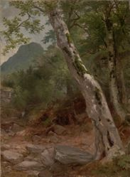A Sycamore Tree, Plaaterkill Clove (The Sycamore, Kaaterskill Clove)