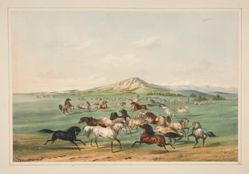 Wild Horses At Play, pl. 3 from the North American Indian Portfolio