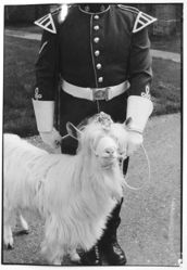 Uniformed guard with bridled goat, Quebec