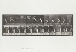Jumping, running twist high jump: plate 158 from Animal Locomotion