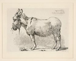 Standing Donkey