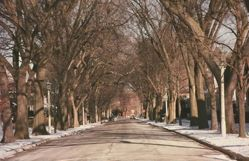 Untitled [Tree-lined street], from When the Bough Breaks