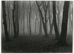 Buchenwald im November (Beech forest in November)