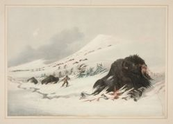 Dying Buffalo Bull, in Snow Drift, pl. 17 from the North American Indian Portfolio